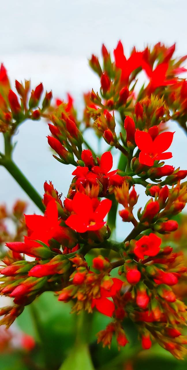 Red flower of nature
