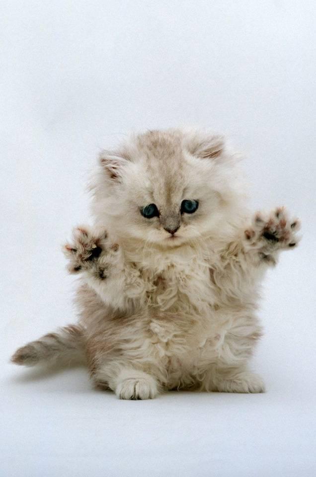 Cute Touch