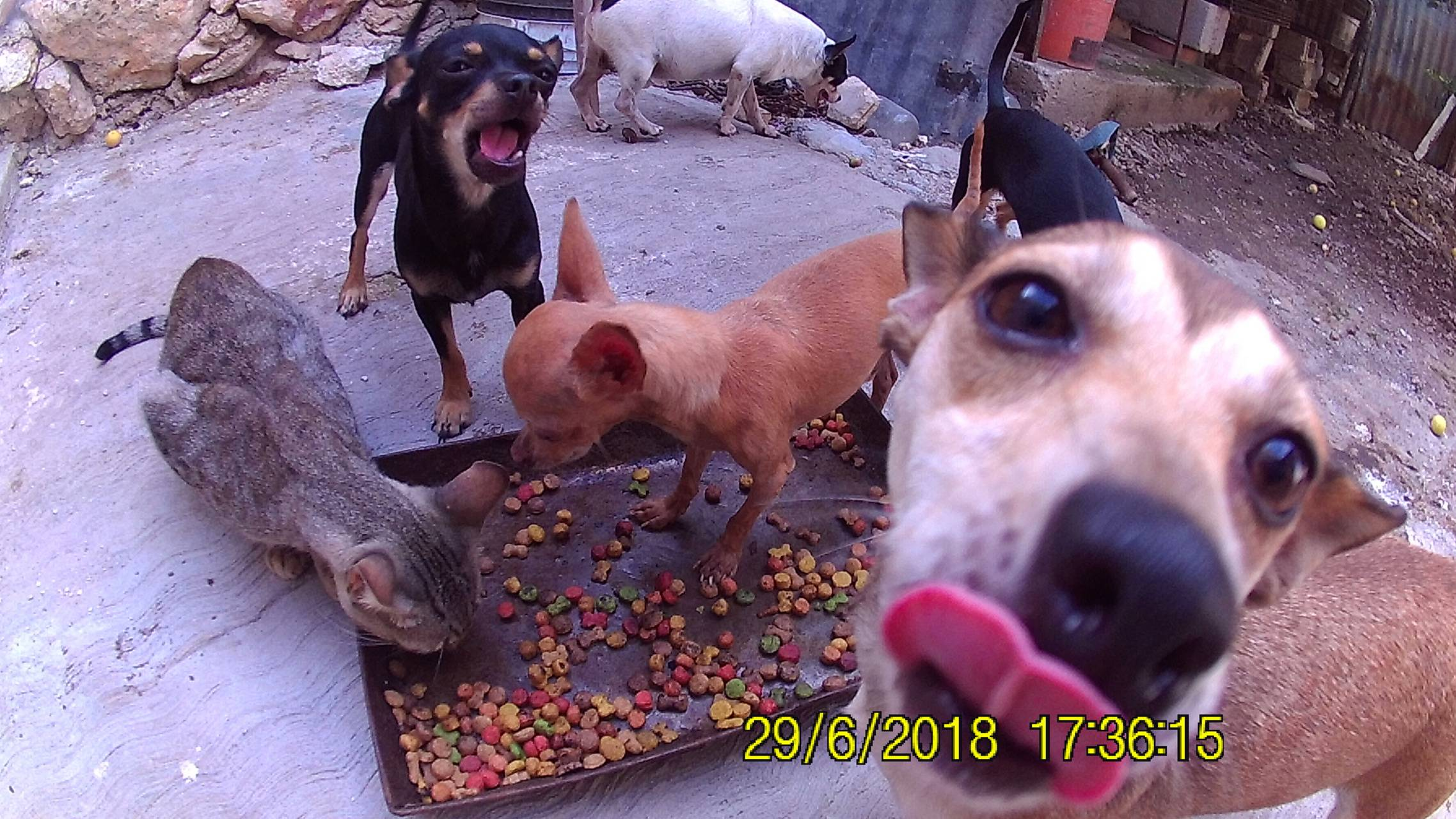 Chihuahua sabroso