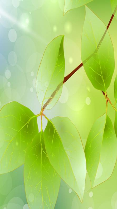 Leaf Hd Wallpapers Free By Zedge