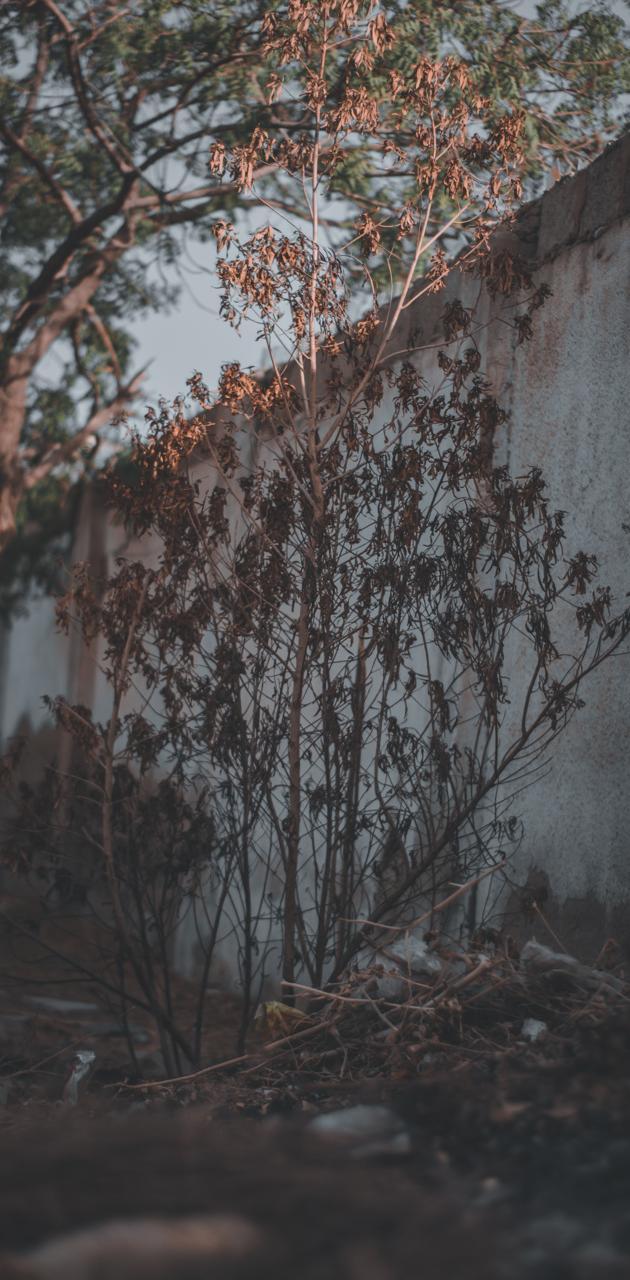 Near Autumn