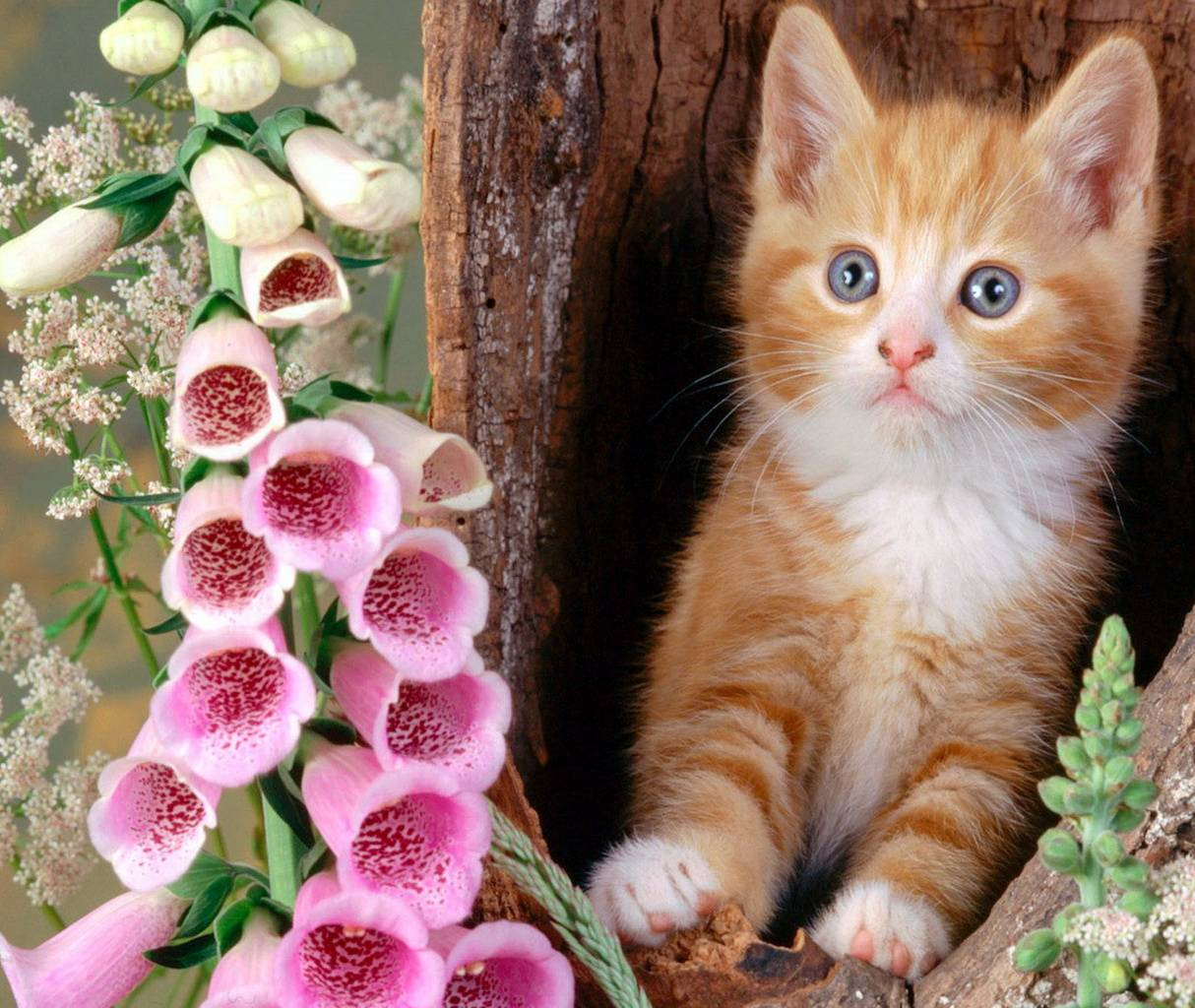 Ginger Cat Hd Wallpaper By Neo630 Ca Free On Zedge