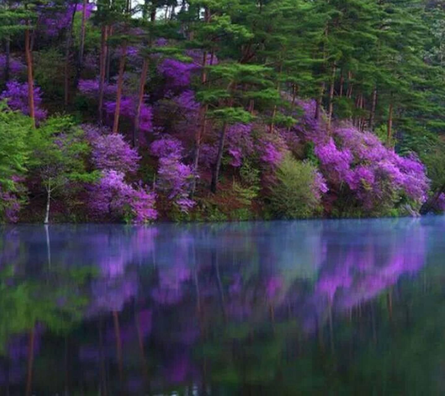 Purple Flowers Over