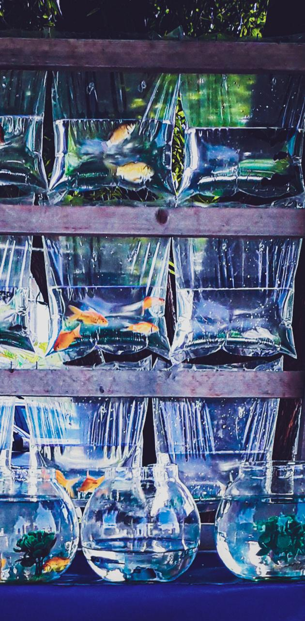 Captured fishes