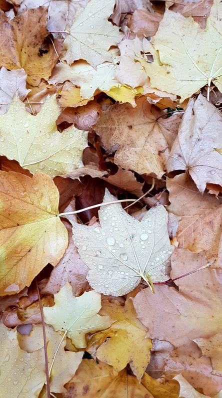 Autumn rainy leaves