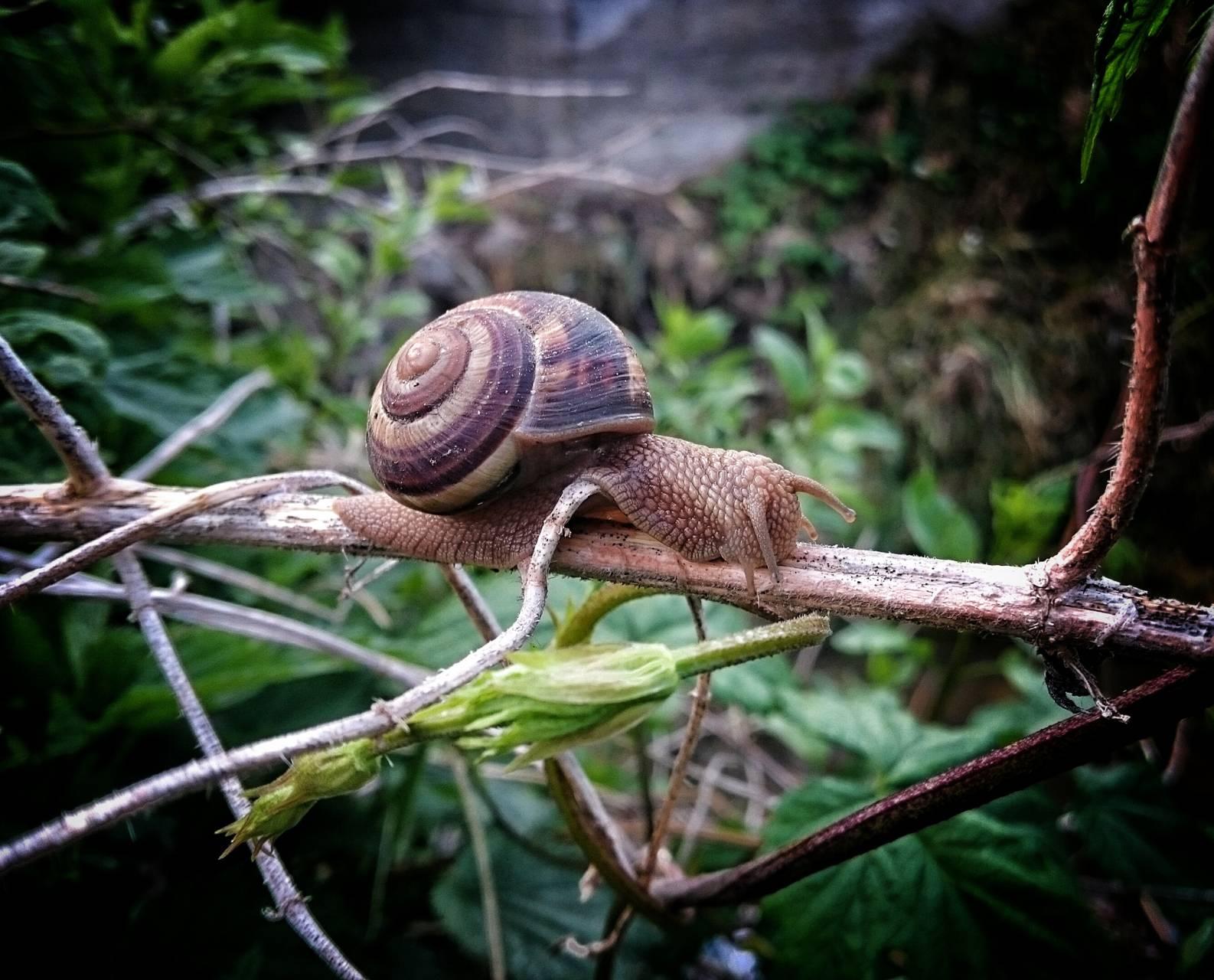 Snail on a twig