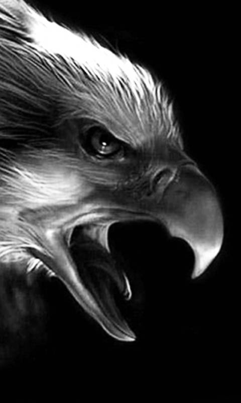 Eagle Wallpaper By Mastodon Rage 3b Free On Zedge