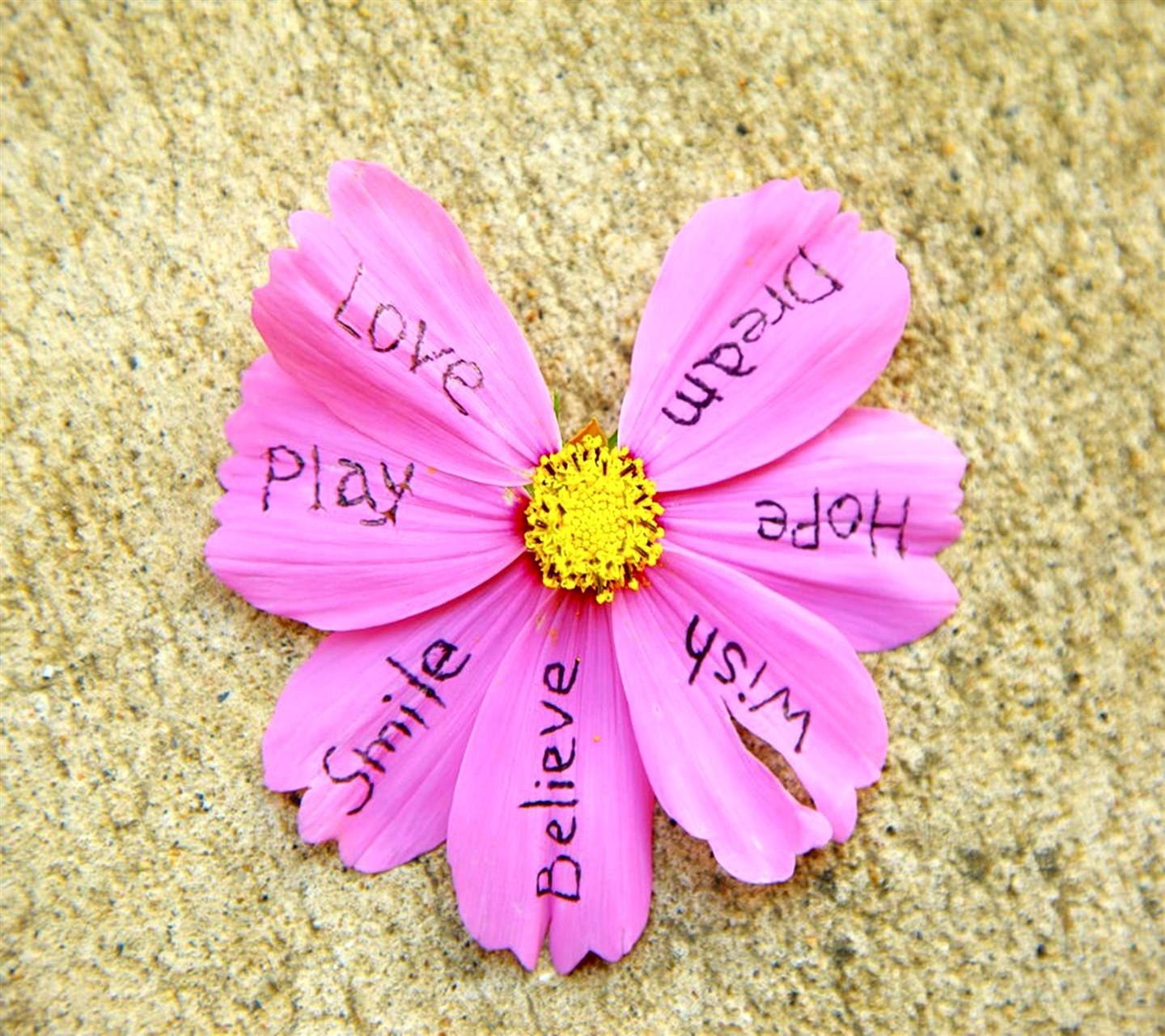 Love Play Smile