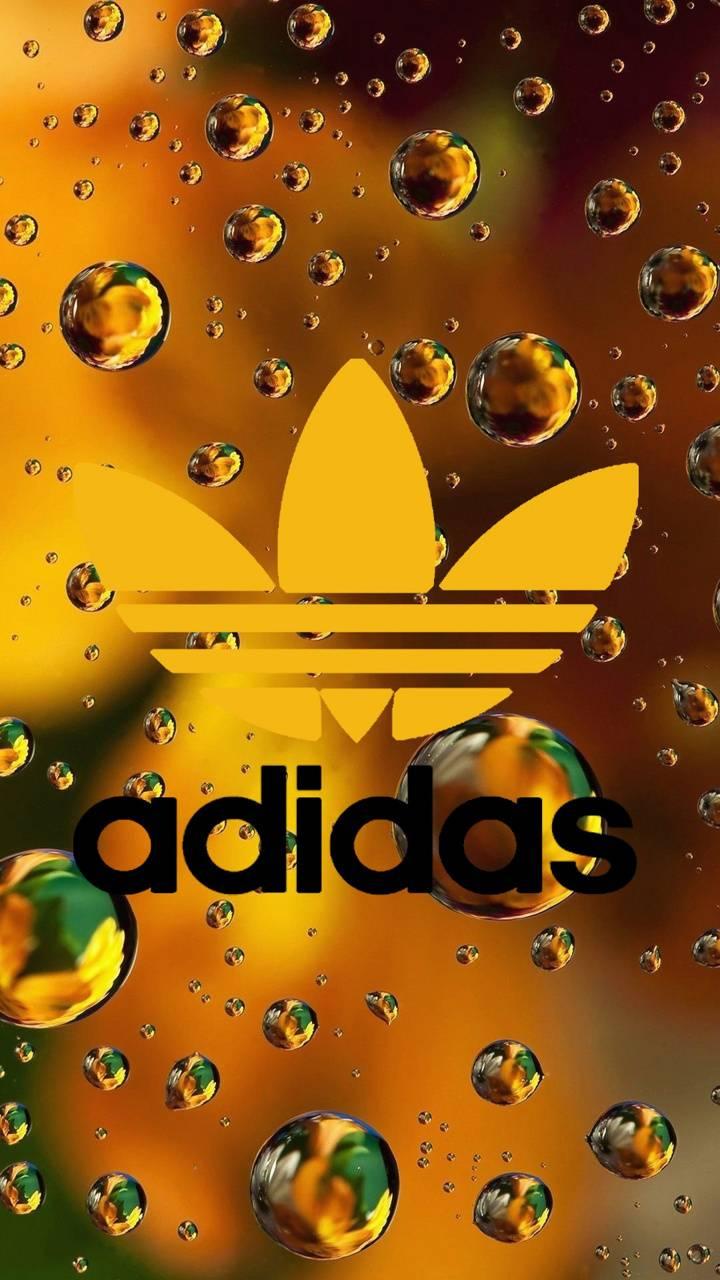 Adidas golden drops