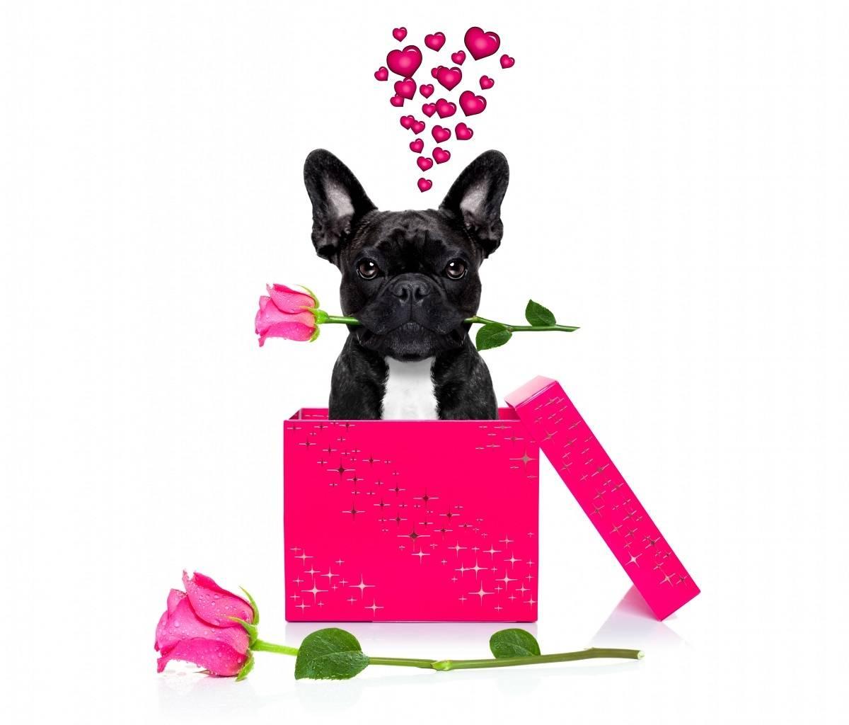 Puppy in Love