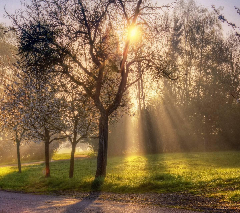 Morning Spring