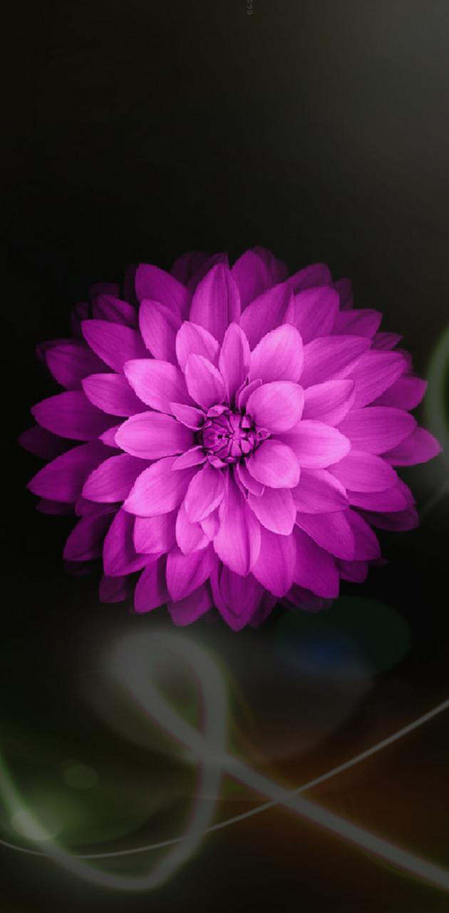 Pink Flower Streaks