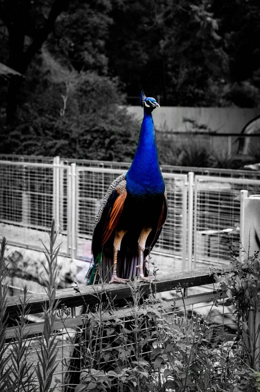 Bird Royal