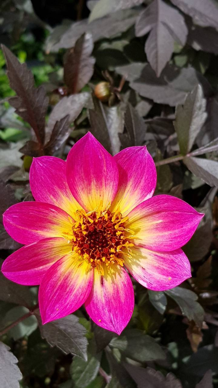 Ibadullah flowers