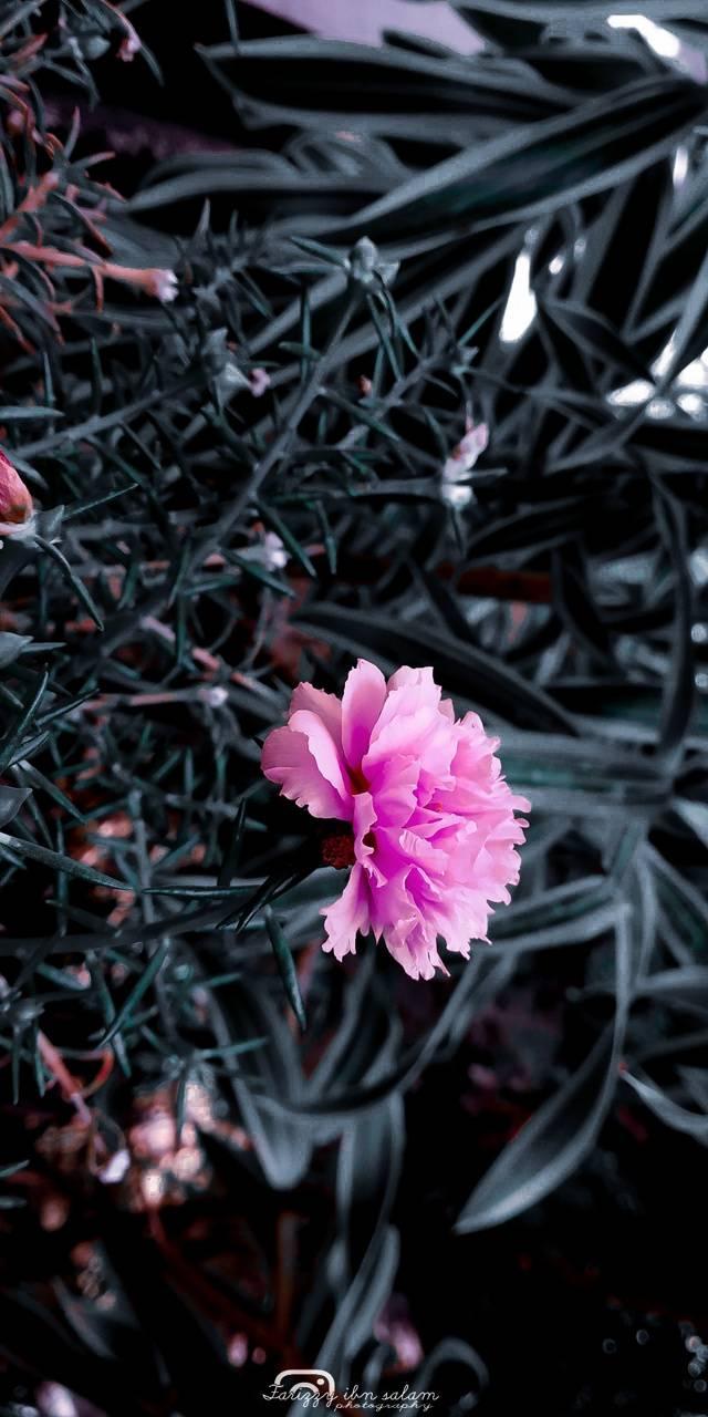 Flower dissortion