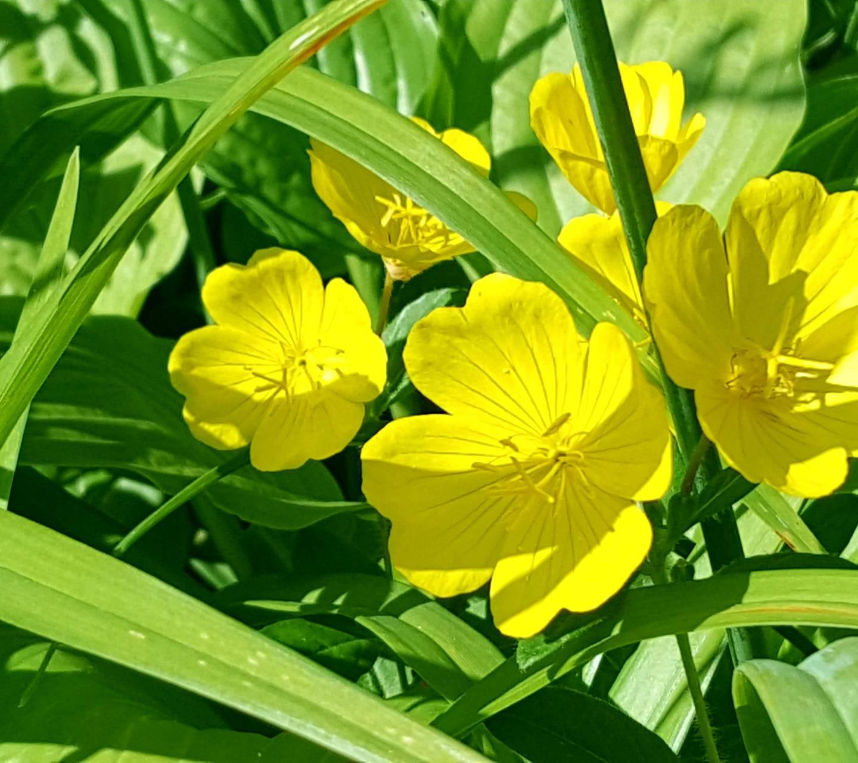 Beautiful In Yellow