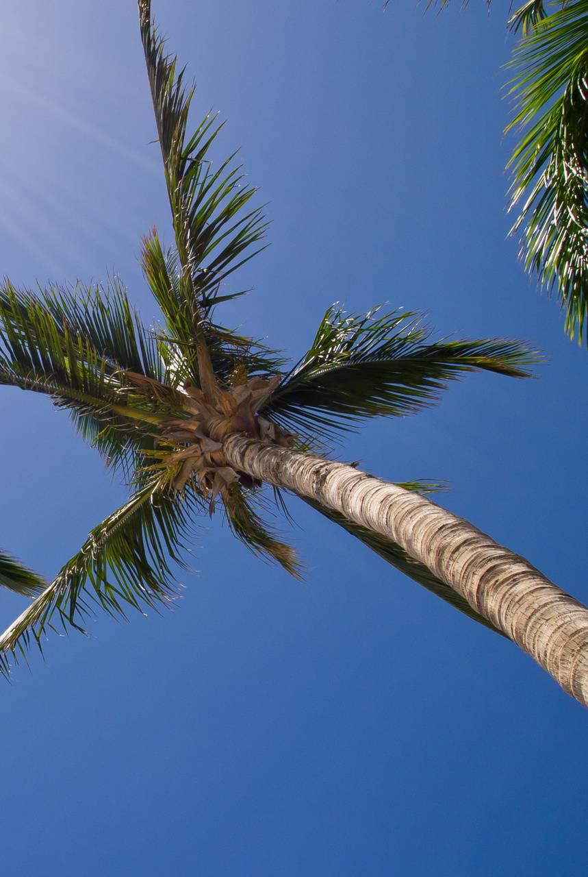 Palmtree098