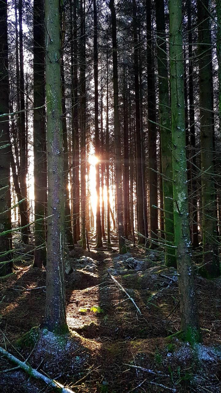 Ireland nature