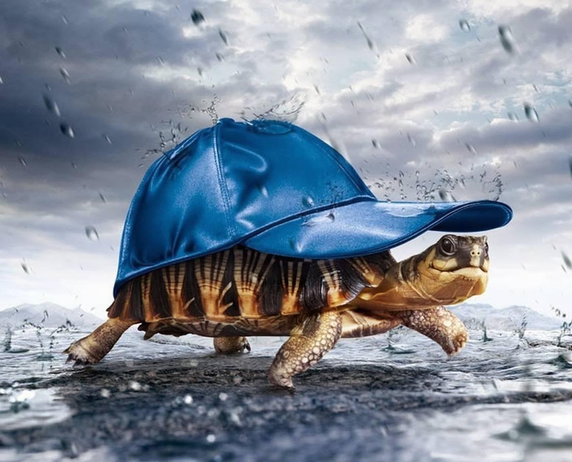 Rainy Turtle