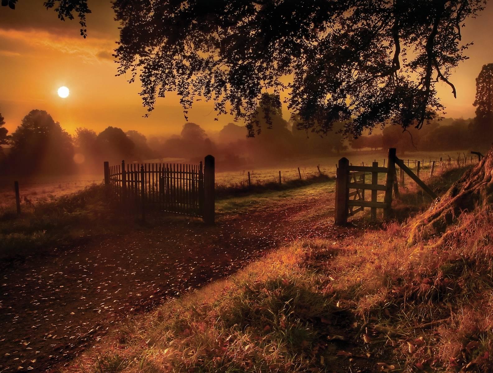 Sunset Scene Hd