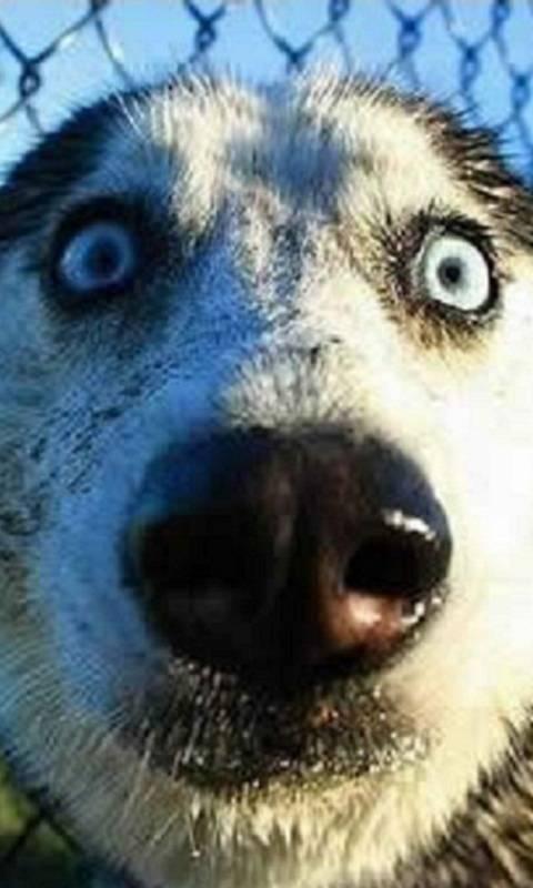 Nossy Dog