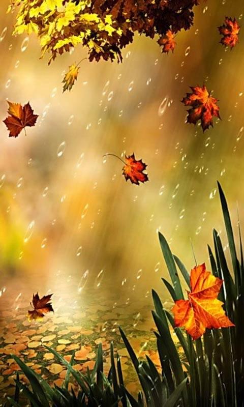 rainy nature