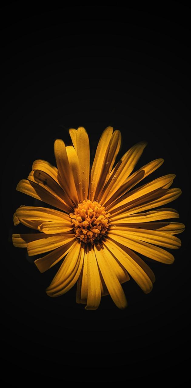 flor cb