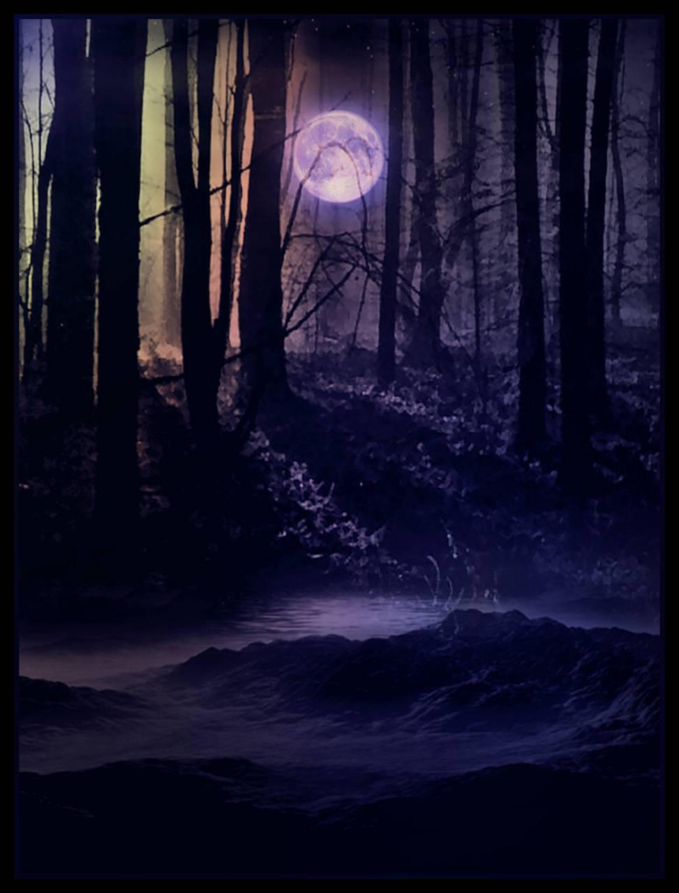 Dark Woods Wallpaper By Galaxyfox711 36 Free On Zedge