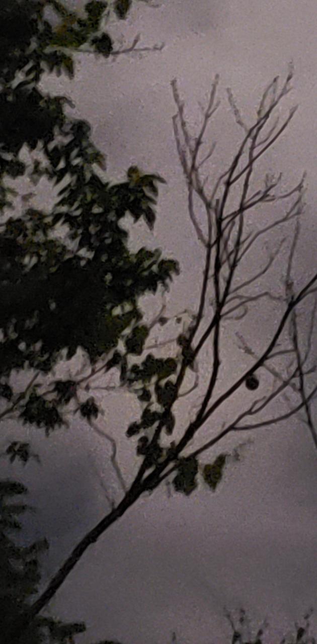Tree at midnight