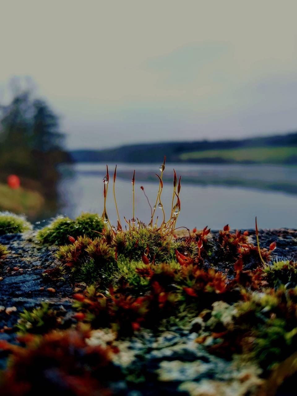 Close up Moss