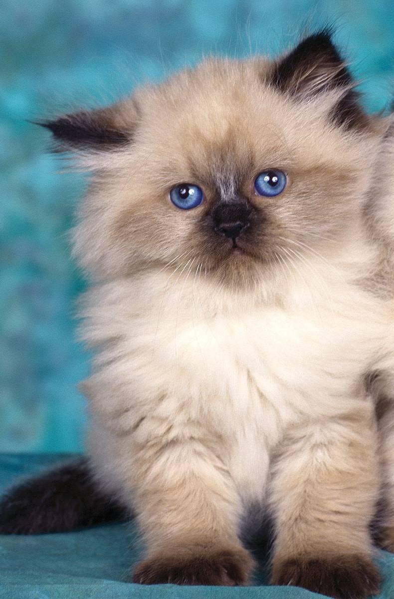 Sweet Cat3