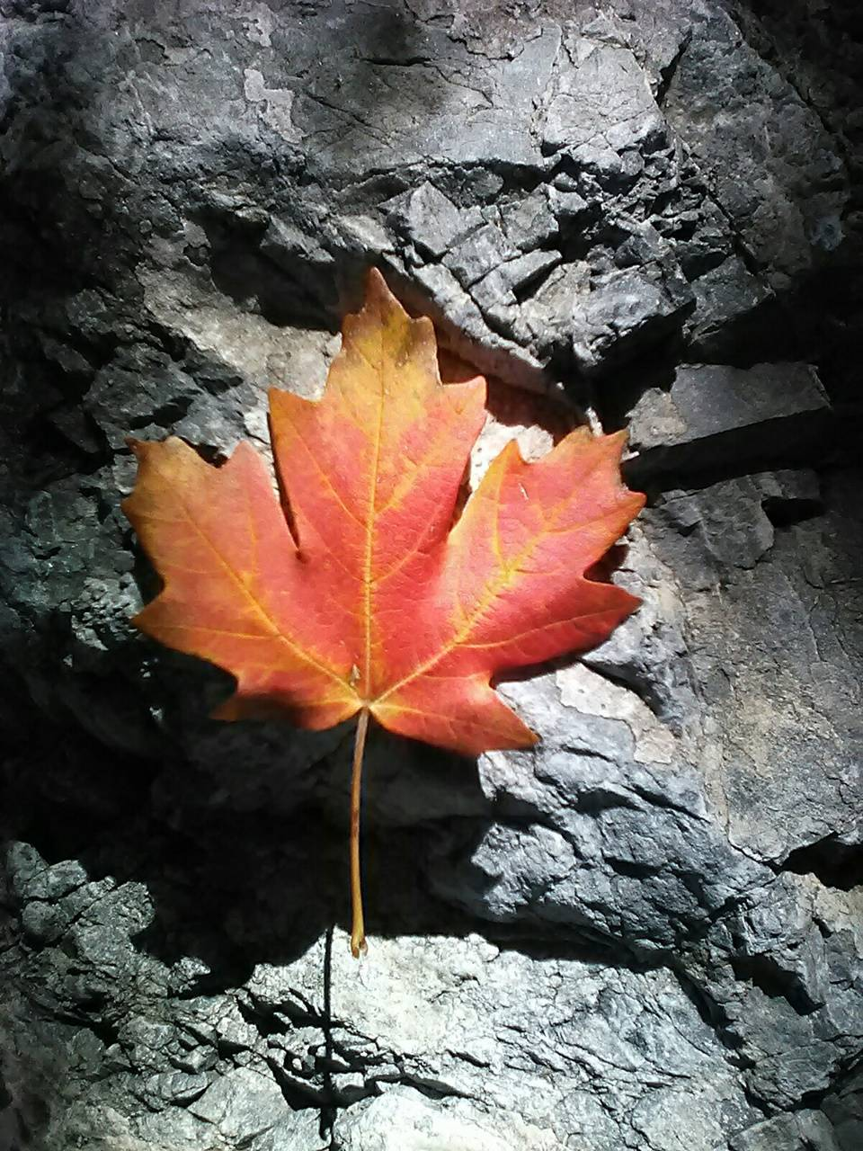 Leaf of Fire