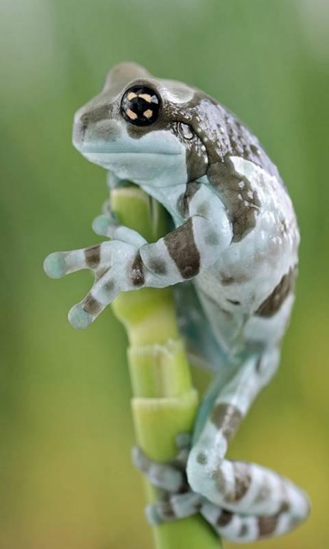 Stunty Frog