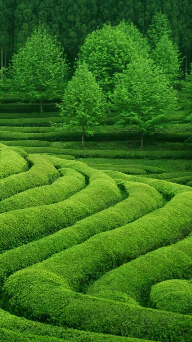 tea waves