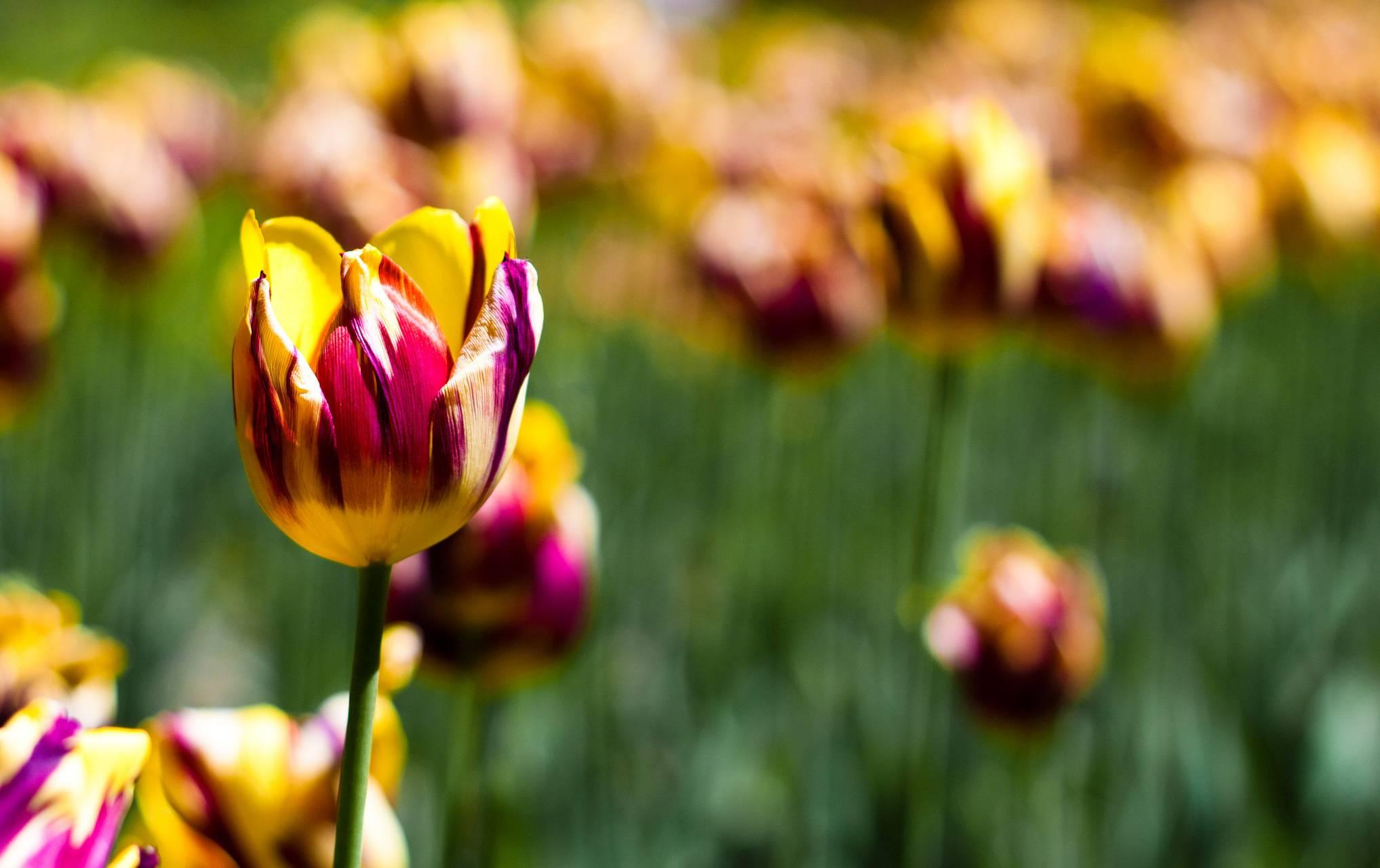 Botanical Garden Tul