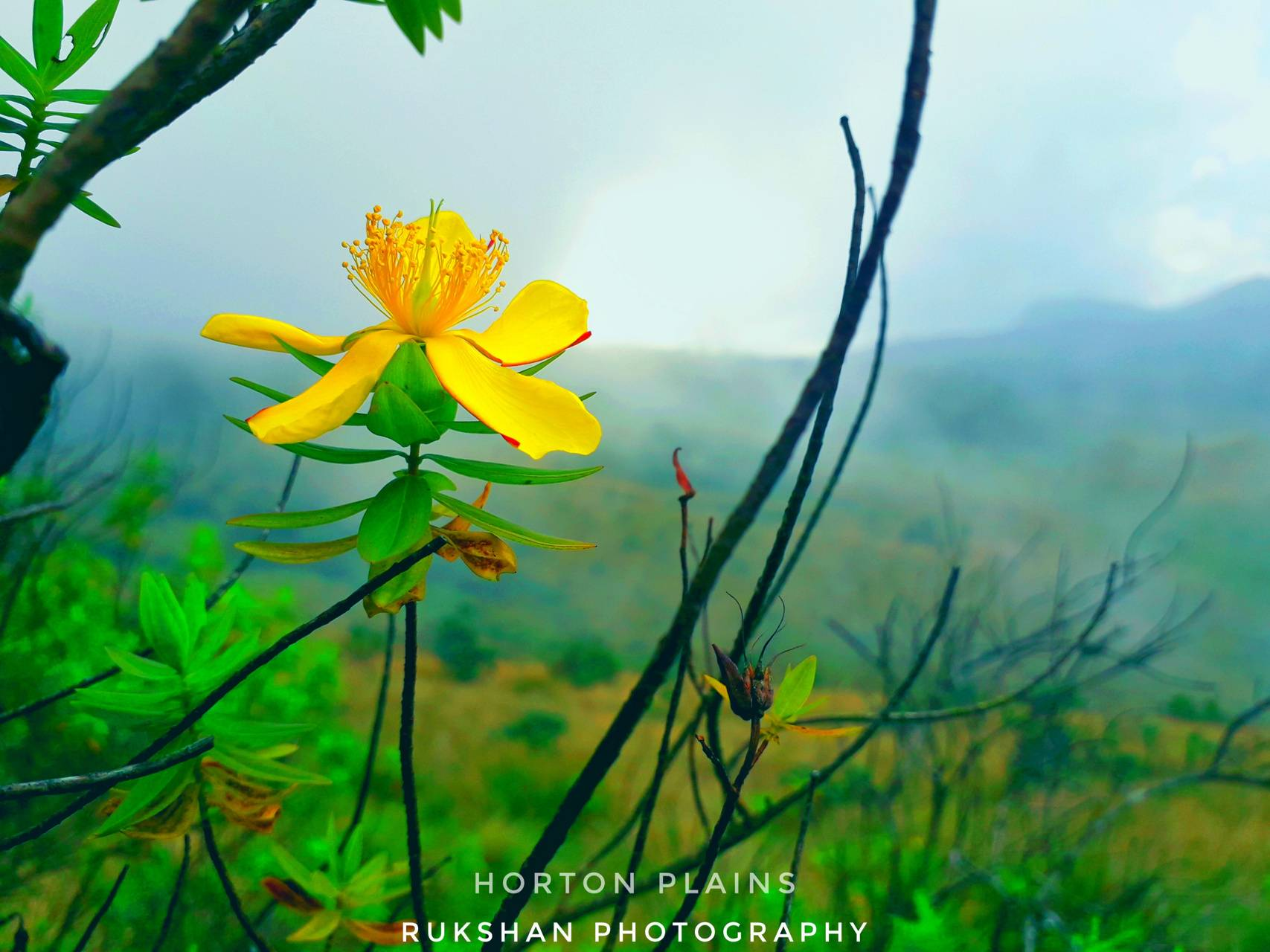 Beautyfull Nature