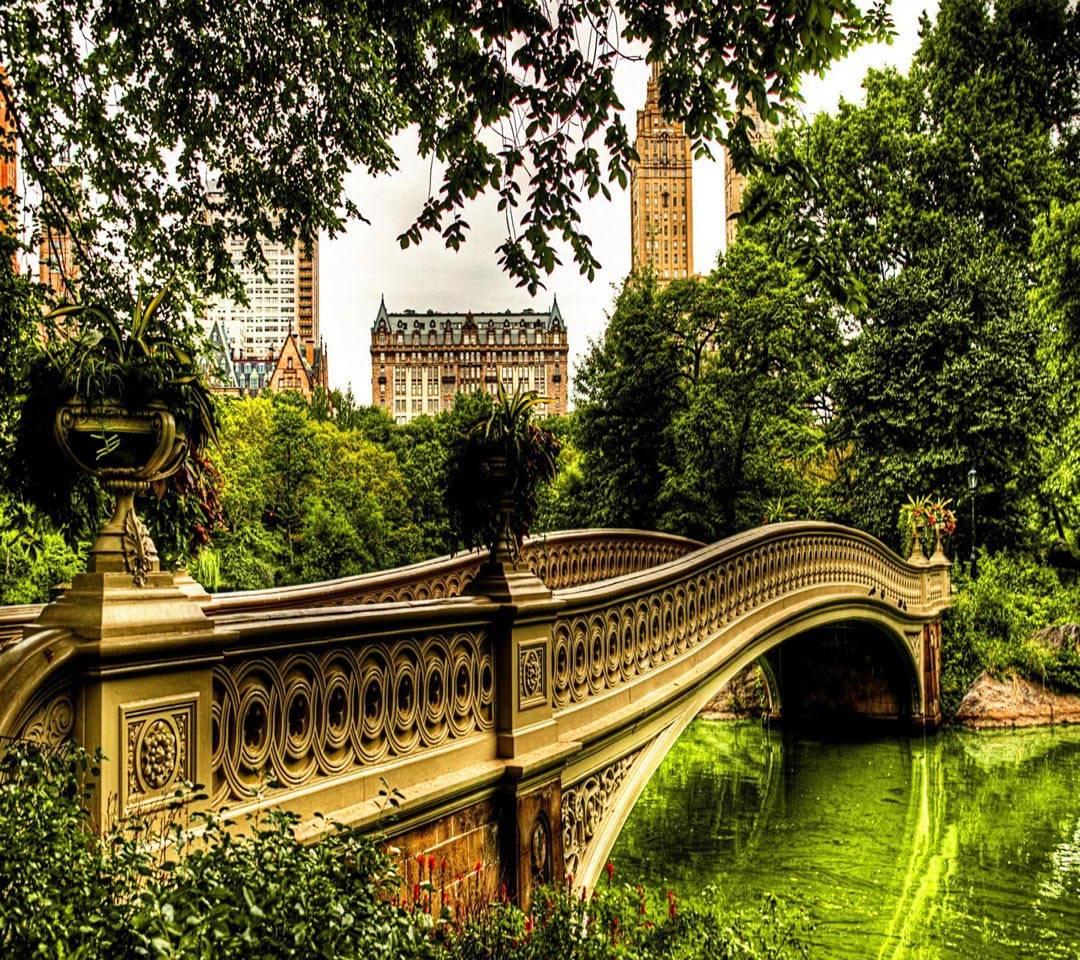 USA park bridge