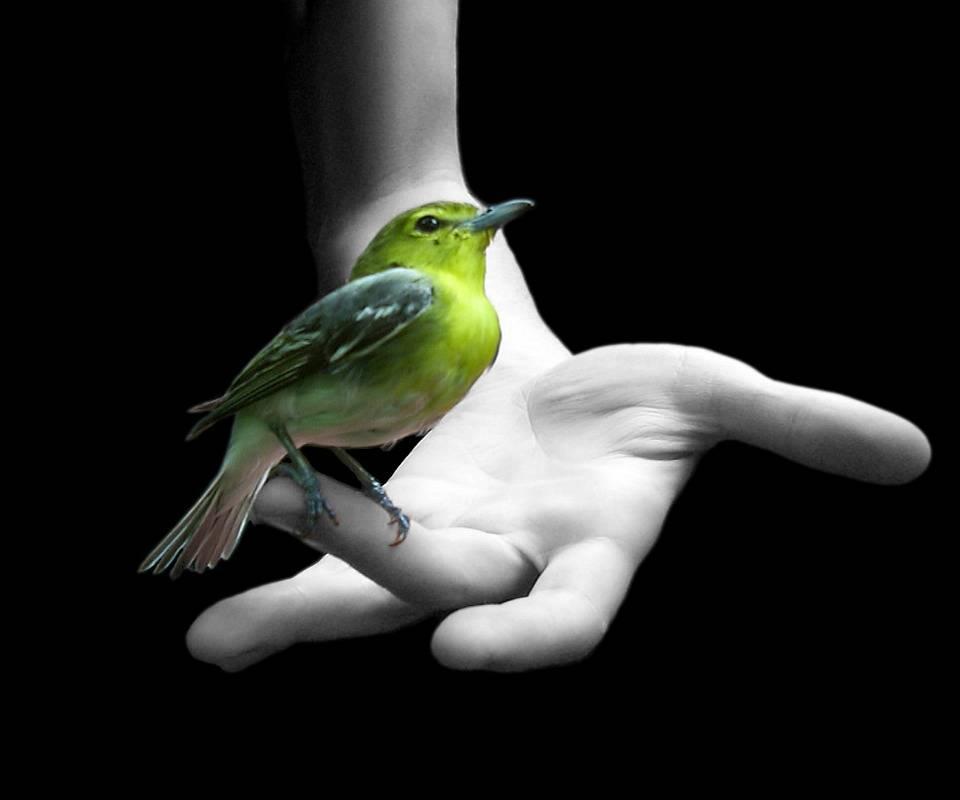 Bird In Hand Hd