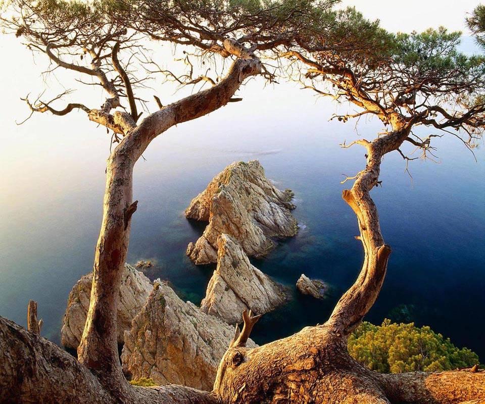 Tree and Rocks Coast