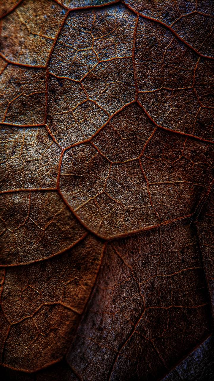 Leaf of Tree HD