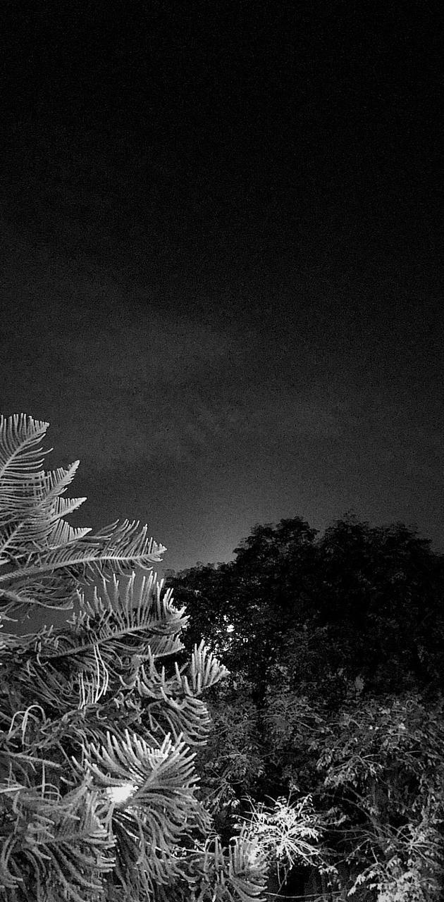 NIGHT NOIR