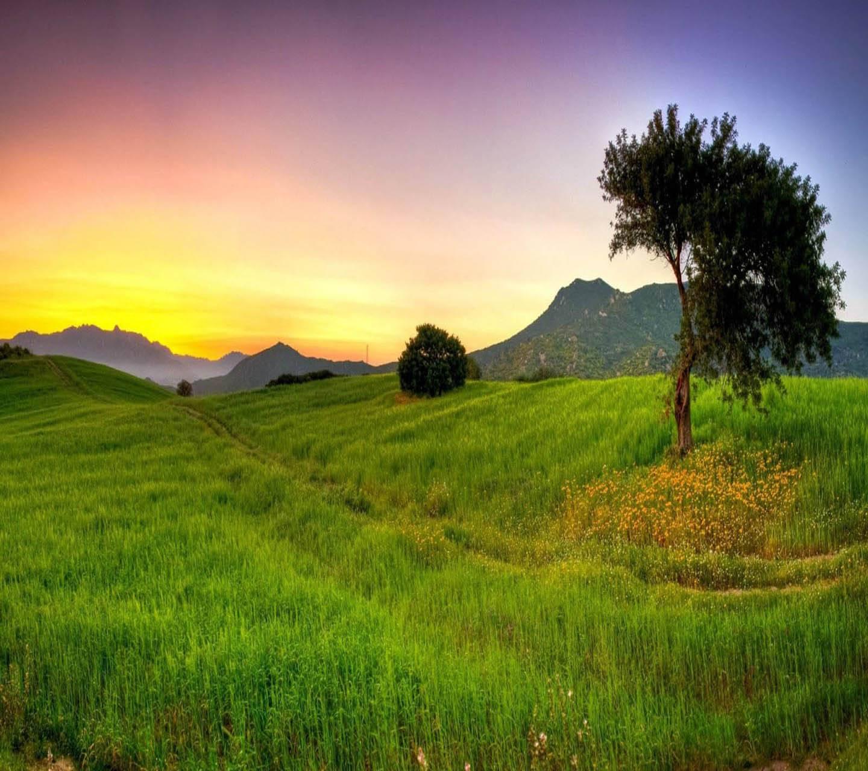 Sunset Landscapes