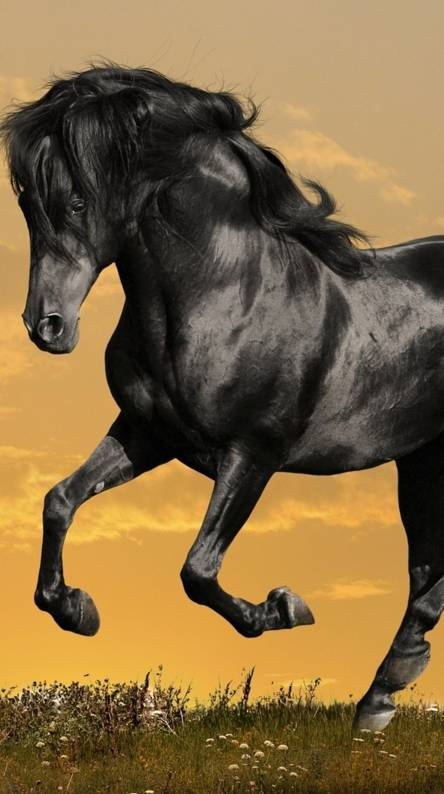 Horse Ringtones and Wallpapers - Free by ZEDGE™