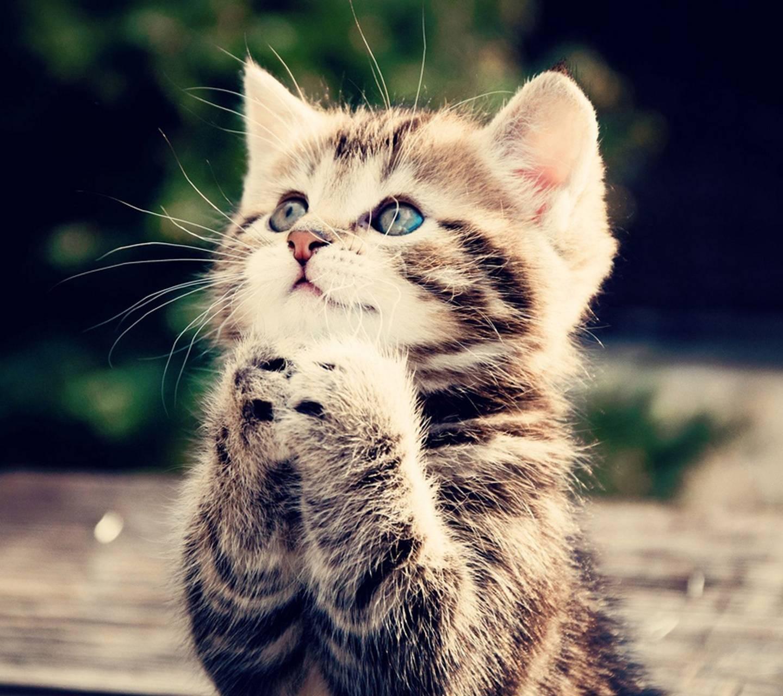 Kitten prayers