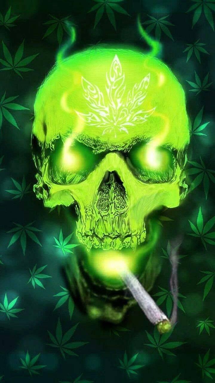 Sweetleaf skull