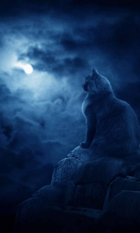 Dark Cat Wallpaper By Pkdon2 D2 Free On Zedge