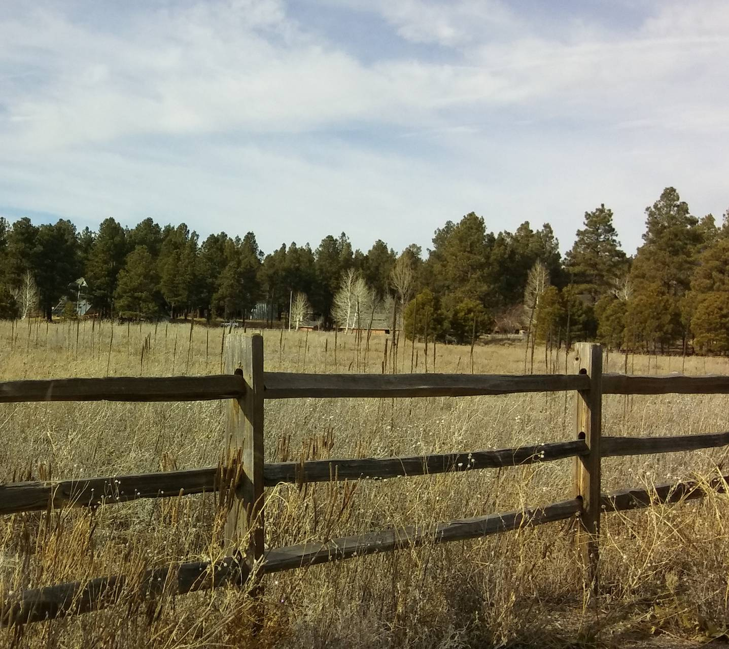 Forest and Fence