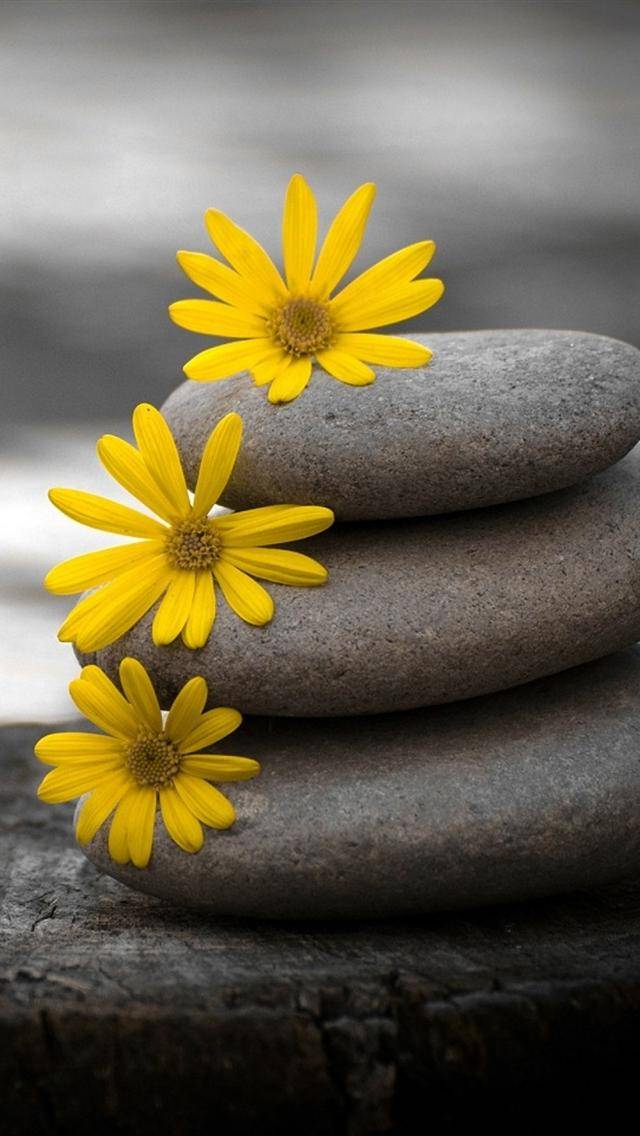 Flower With Stone