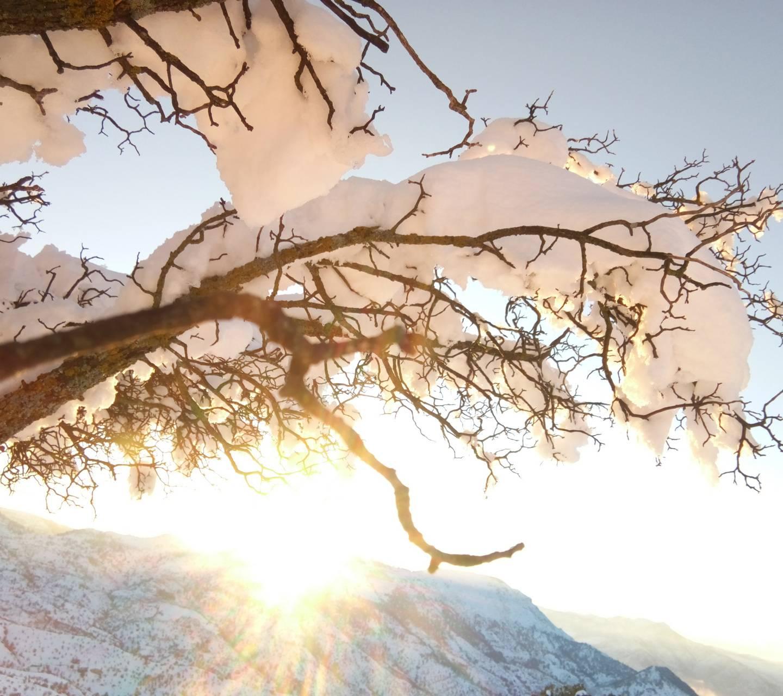 Snow guenzet