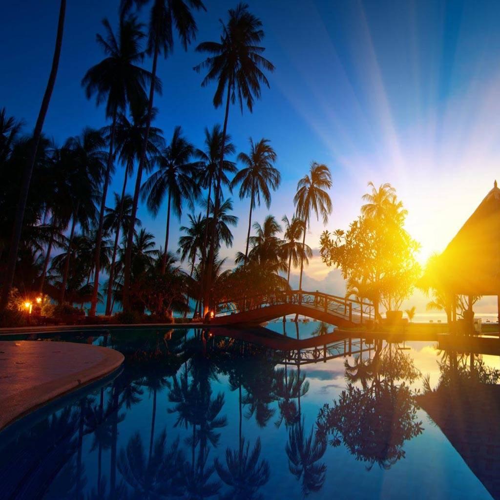 Sea Palm tree nature